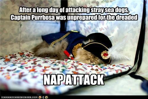 after,attack,attacking,captain,caption,captioned,cat,costume,day,dreaded,dressed up,long,nap,Pirate,sea dogs,stray,unprepared
