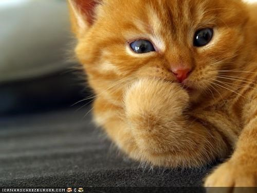 bored cyoot kitteh of teh day listening orange - 4357242368
