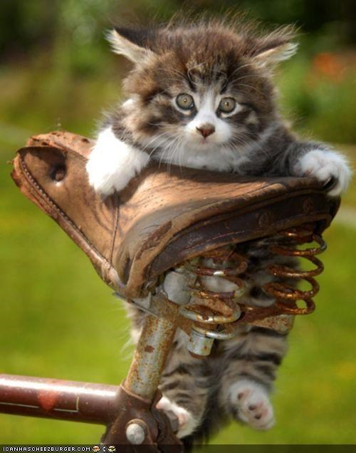 bicycle,bike,cyoot kitteh of teh day,Fluffy,kitten,rusty