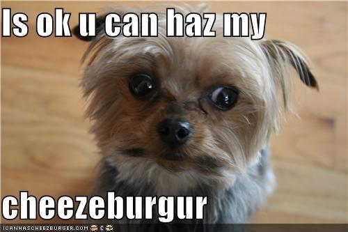 Cheezburger Image 4357265664