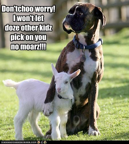 baby boxer dont dont worry friends friendship goat Hall of Fame picking on protecting protection reassurance reassuring teasing worry - 4357390336