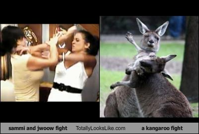 animals,fight,jersey shore,JWoww,kangaroo,sammi