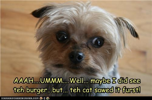 AAAH....UMMM....Well... maybe I did see teh burger...but... teh cat sawed it furst!