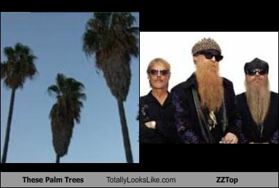 band,beards,palm trees,trees,zz top