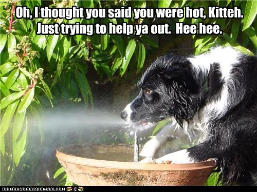 border collie,cat,fountain,helping,prank,spraying,water,water fountain