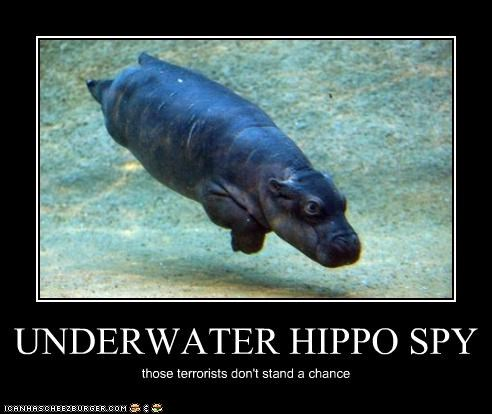 UNDERWATER HIPPO SPY those terrorists don't stand a chance
