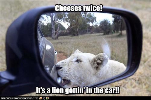 Cheeses twice! It's a lion gettin' in the car!!