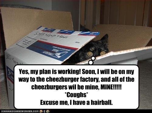 Cheezburger Image 4359635968