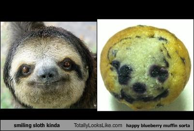 animals,blueberry,blueberry muffin,food,sloth,smiling,smiling sloth