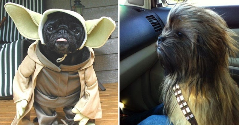 ternura nivel mascota star wars