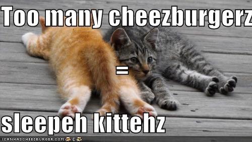 Cheezburger Image 4361710336