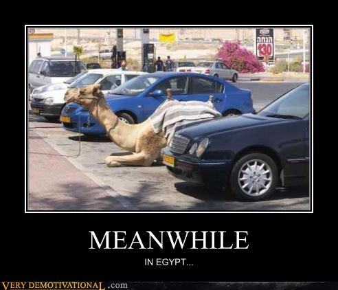 MEANWHILE IN EGYPT...
