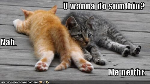 agreement,caption,captioned,cat,Cats,cuddling,Hall of Fame,kitten,lacking,lazy,lying down,Me Neither,motivation,question