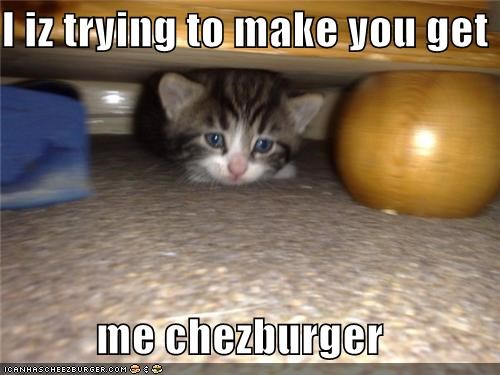 Cheezburger Image 4362415872