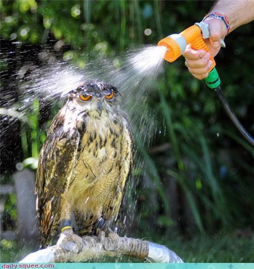 bird,Hall of Fame,hose,Owl,shower,wet