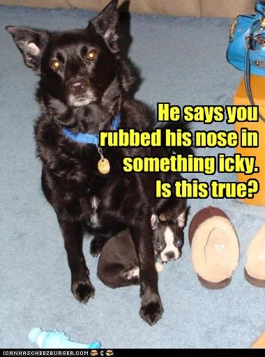 He says you rubbed his nose in something icky. Is this true?