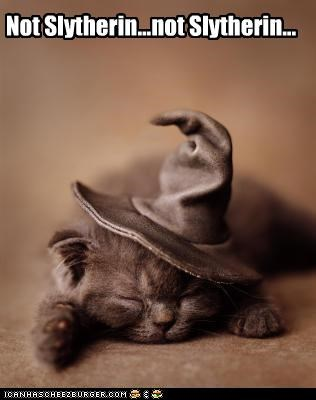 afraid caption captioned cat choosing deciding decision Harry Potter hat hoping kitten not sleeping slythering sorting sorting hat - 4364613888
