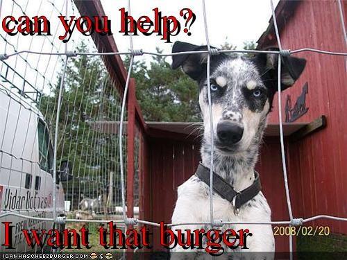 Cheezburger Image 4365077504