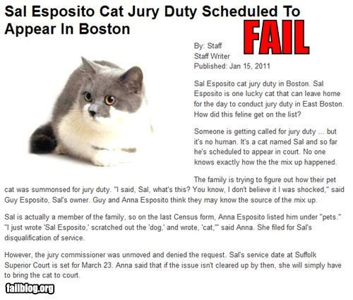 Cats,failboat,government,g rated,jury duty,oh Massachusetts,pets,Probably bad News,silly laws