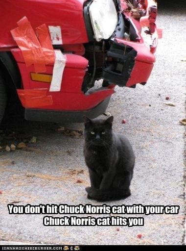 You don't hit Chuck Norris cat with your car Chuck Norris cat hits you