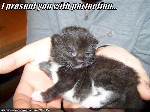 caption captioned cat gift kitten perfection present showing showing off - 4366700032