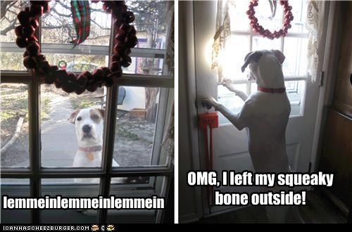 lemmeinlemmeinlemmein OMG, I left my squeaky bone outside!
