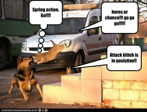 heres ur chance!!! go go go!!!!! Spring action, Go!!!! Attack kitteh is in posistion!!