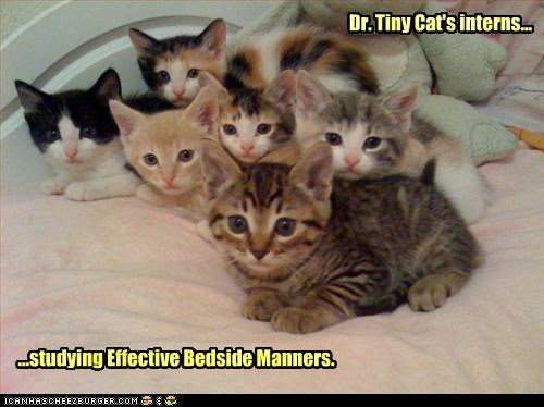 Dr. Tiny Cat's interns... ...studying Effective Bedside Manners.