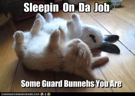 Sleepin On Da Job Some Guard Bunnehs You Are