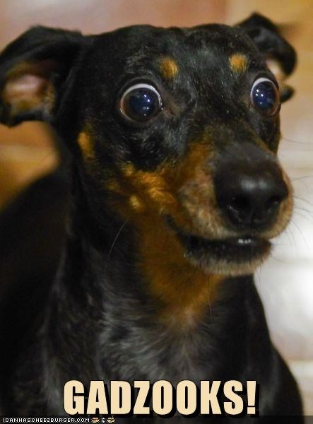 alarmed exclamation gadzooks Hall of Fame shocked shouting surprised whatbreed wide eyed - 4368065024