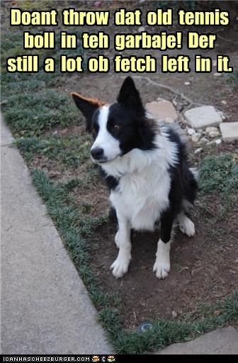 begging border collie fetch garbage Hall of Fame old pleading please reason reasoning Sad tennis ball throwing away trash - 4368372736