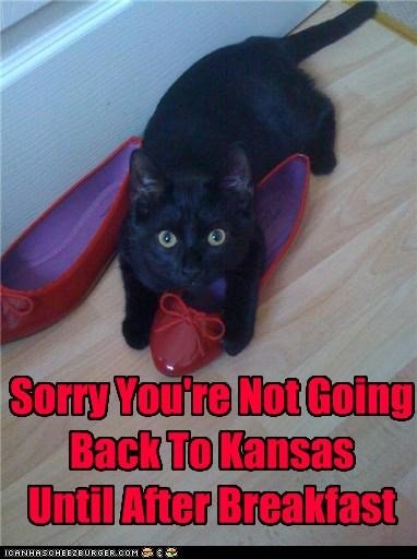 Sorry You're Not Going Back To Kansas Until After Breakfast