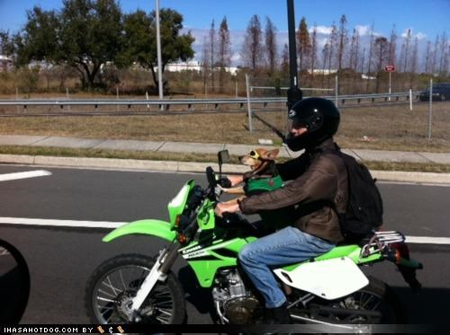 awesome driving goggles human motorcycle riding style whatbreed - 4369090048