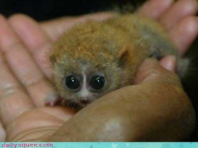 animal bush baby cute Fluffy - 4369113344