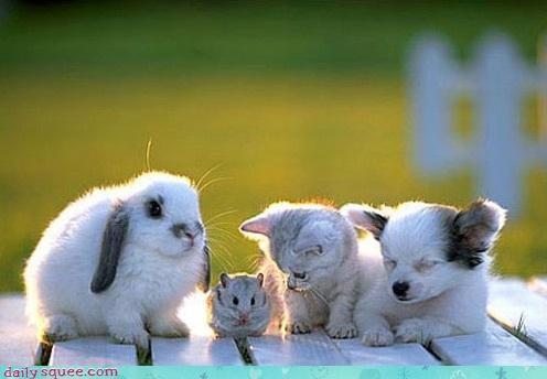 bunny hamster kitten puppy - 4369119488