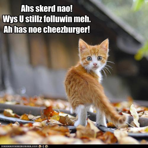 Cheezburger Image 4369142528