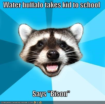 bison,Lame Pun Coon,water buffalo