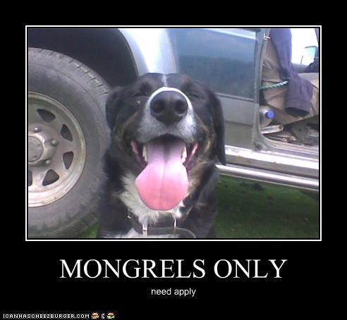 MONGRELS ONLY need apply