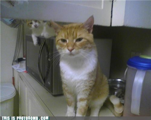 Cats,Caturday,microwave,peakaboo,photobomb