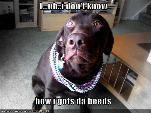 beads denial excuse Hall of Fame labrador lying Mardi Gras nervous - 4369508864