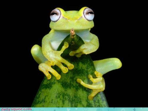 acting like animals condescending ego frog leaf modus operandi perching phd pretension self confidence studying thesis tree tree frog