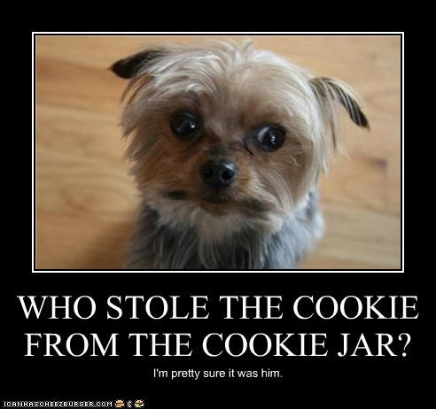 WHO STOLE THE COOKIE FROM THE COOKIE JAR? I'm pretty sure it was him.