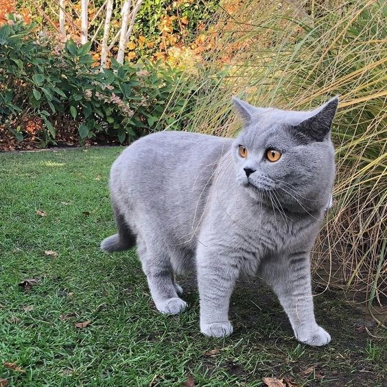 a funny list for the end of 2017 of the first time cats went outside