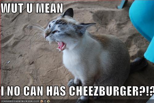 Cheezburger Image 437049600