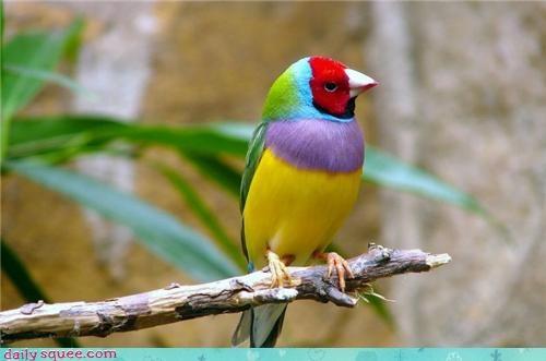bird cute - 4370727168