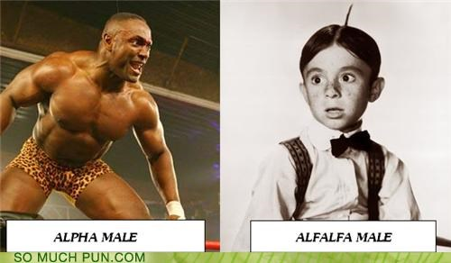 alfalfa alpha male character comparison little rascals male side by side two - 4370778624