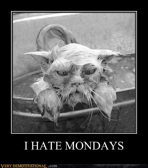 angry,bath,cat,mondays