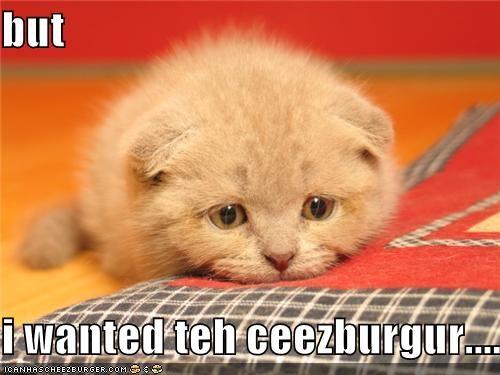 Cheezburger Image 4371797248