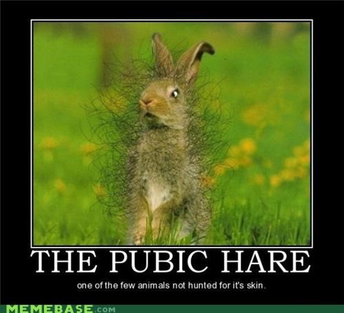 animals,eww,hare,pubic hair,rabbit,wtf