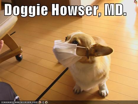 announcement contest corgi doctor dr tinycat mask name orthopedic pun shorthopedic surgery surgical mask winner